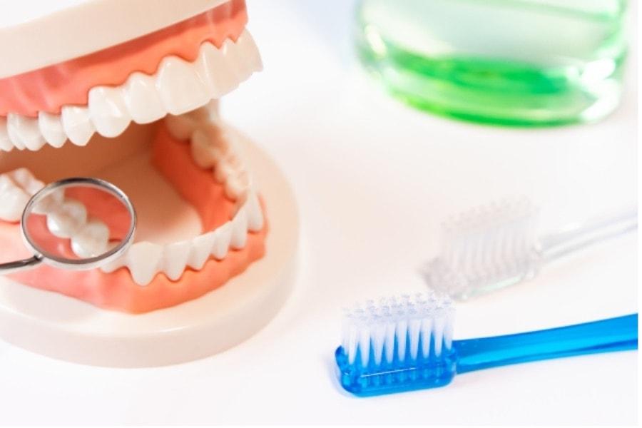 模型の中で虫歯、歯周病をミラーで探している