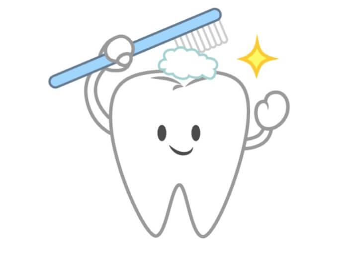 フッ素入りの歯磨き粉を使用して歯を強化している